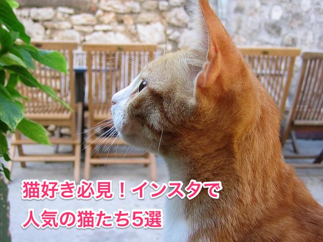 インスタで人気の猫たち5選
