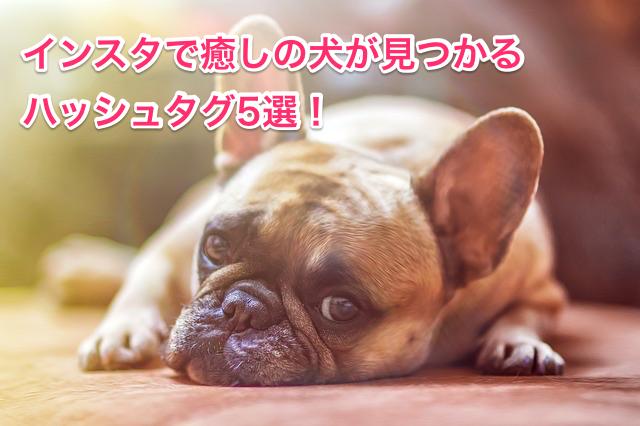 癒しの犬が見つかるハッシュタグ5選!