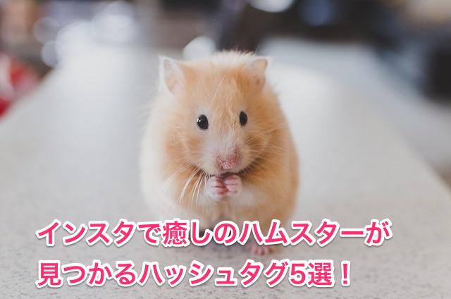 癒しのハムスターが見つかるハッシュタグ5選!