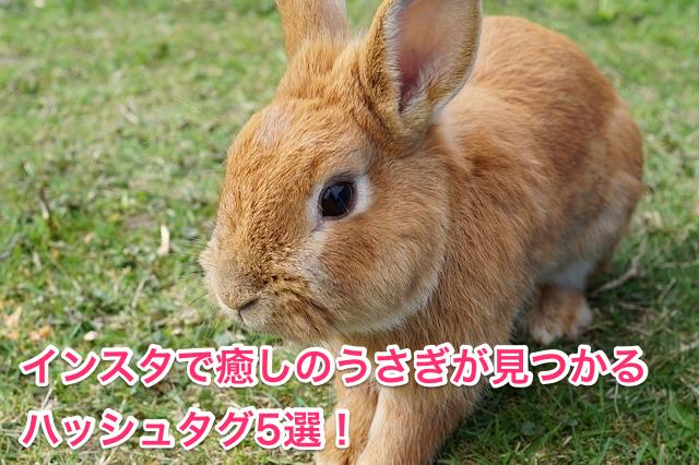 癒しのうさぎが見つかるハッシュタグ5選!