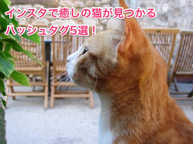 癒しの猫が見つかるハッシュタグ5選!