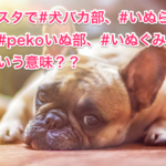 #犬バカ部、#いぬら部、#pekoいぬ部、#いぬぐみってどういう意味??
